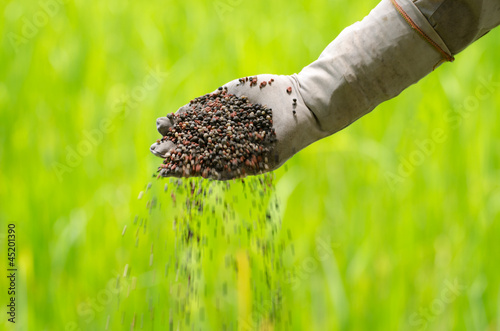 Organic fertilizer pouring with farmer hand