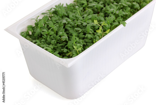Fresh garden cress in white plastic box isolated on white