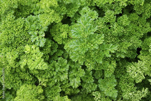 Verdure,salad