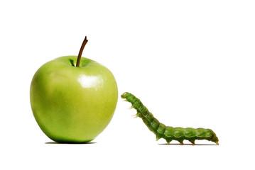 Gusano verde comiendo manzana verde.