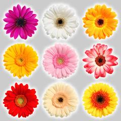 Sammlung Blumen - Collection of flowers