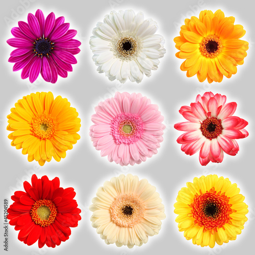 Sammlung Blumen - Collection of flowers