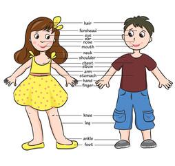 Cartoon boy and girl. Vocabulary of body parts.