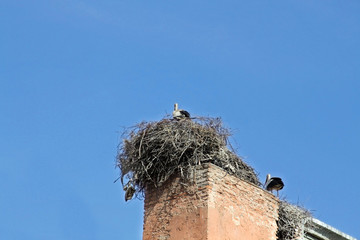 Storks in the nests on the wall
