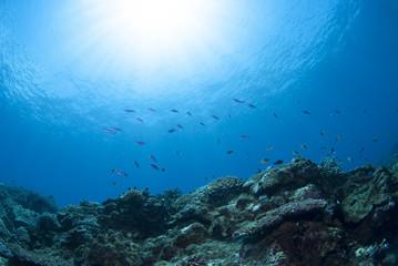 海底の景色