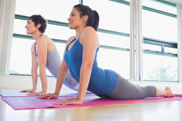 Women doing cobra yoga pose
