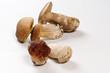 Funghi porcini - Porcini mushrooms