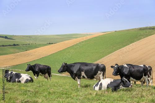 Fototapeten,viehwirtschaft,kühe,kühe,milchprodukte