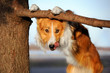 cute funny dog stucks her tongue
