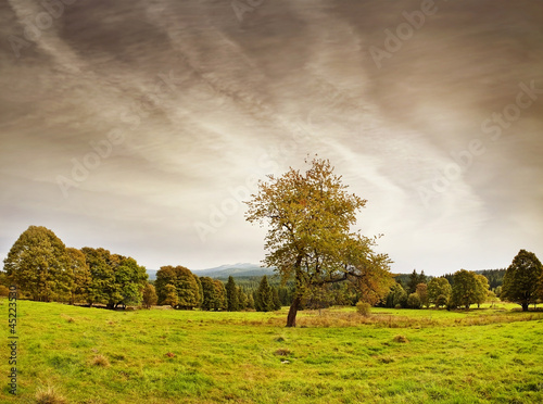 autumn landscape with trees in vintage style