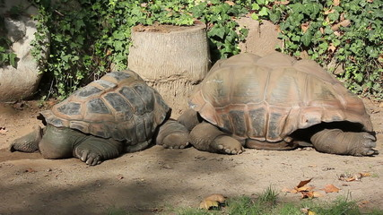 giant turtles 01