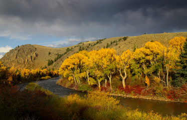 Scenic Taylor river in Colorado during autumn time