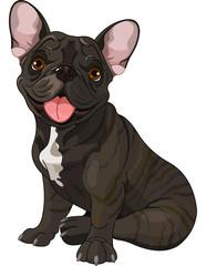 Cute  bulldog
