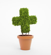 Cross shaped pot plant