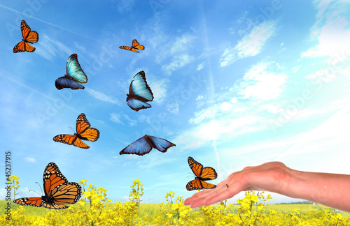 Butterflies being released