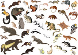 large collection of small animals