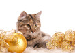 cute cat and christmas decoration