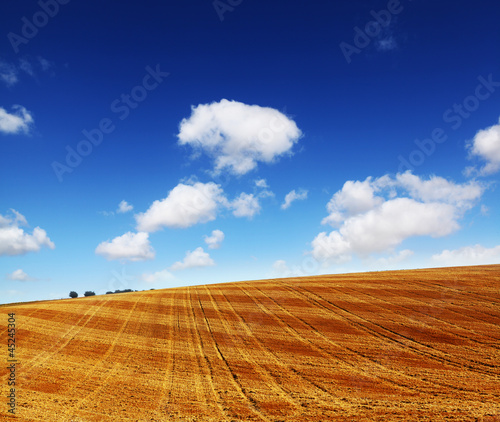 cut wheat field