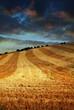 harvested farmland