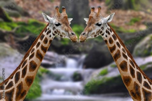 Fototapeten,afrika,afrikanisch,tier,attraktion