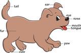 Fototapety A cute cartoon dog. Vocabulary of body parts.