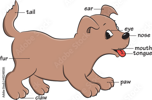 A cute cartoon dog. Vocabulary of body parts.