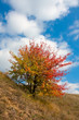 nice autumn tree