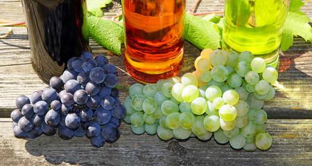 Weintrauben und Wein - Wine