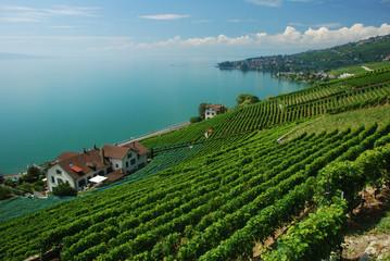Lavaux, Suisse