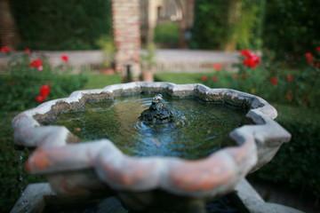 fontaines à eau