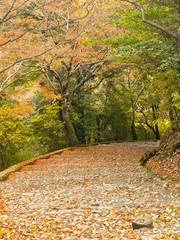 Stairway in autumn