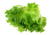 Fresh organic hydroponic Frille Iceberg Lettuce