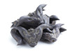 Horn Shaped Water Caltrop