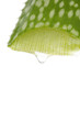 aloe vera sliced leaf with juice droplet