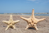 starfishes with beach background