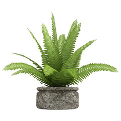 Nephrolepis fern houseplant
