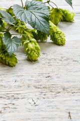 Green fresh hop border