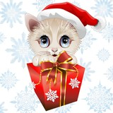 Christmas Kitten Santa with Gift-Gattino Natale con Regalo