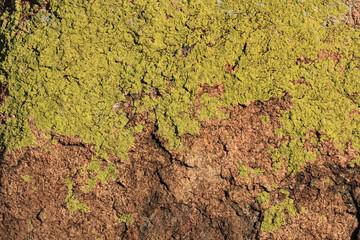 Камень,покрытый зеленым лишайнико