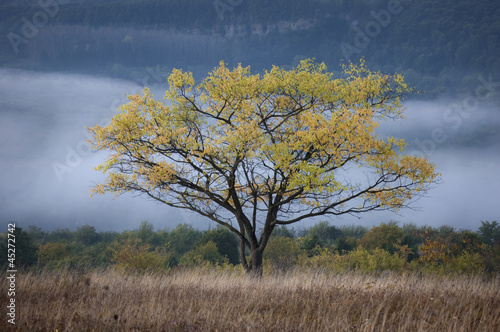 morning landscape with tree and fog