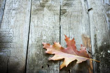 Autumn leaf on wooden boards background