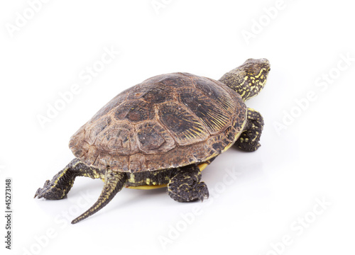 Turtle walks isolated