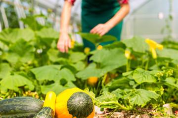 Gärtnerin in ihrer Gärtnerei bei Ernte