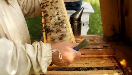 Beekeeper working with honeycomb