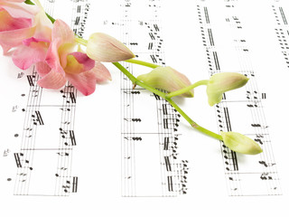 beautiful orchid on music note