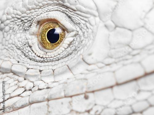 Poster iguana