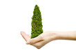 hand holding christmas tree isolated on white background