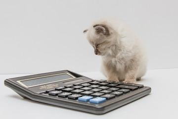 Котёнок и калькулятор 5