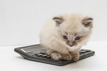 Котёнок и калькулятор 4