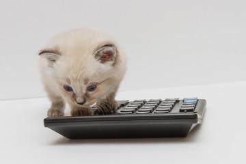Котёнок и калькулятор 3
